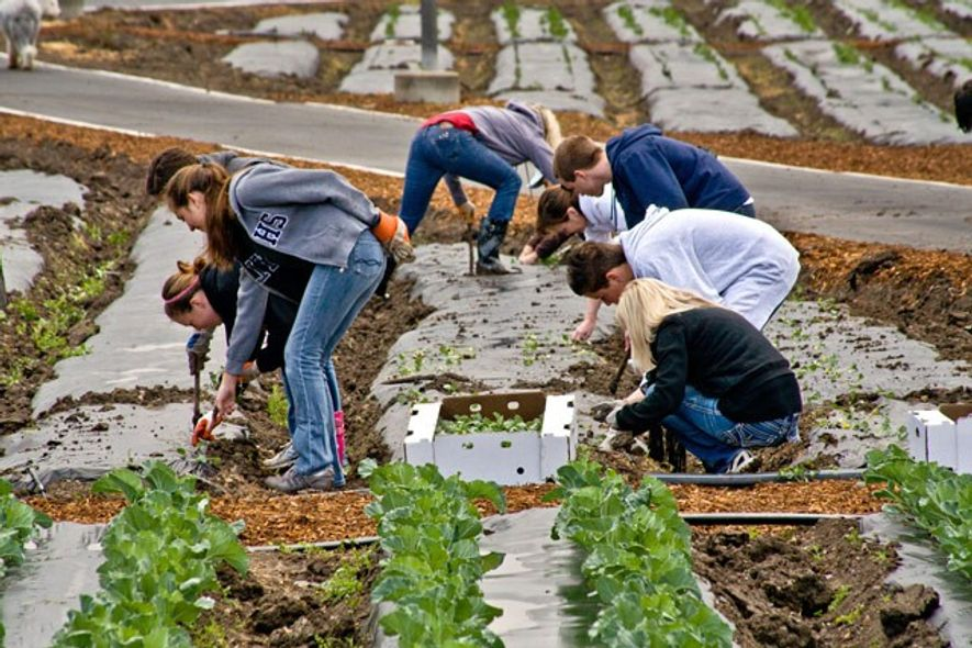 Charitable volunteers plant spinach in Irvine, CA.