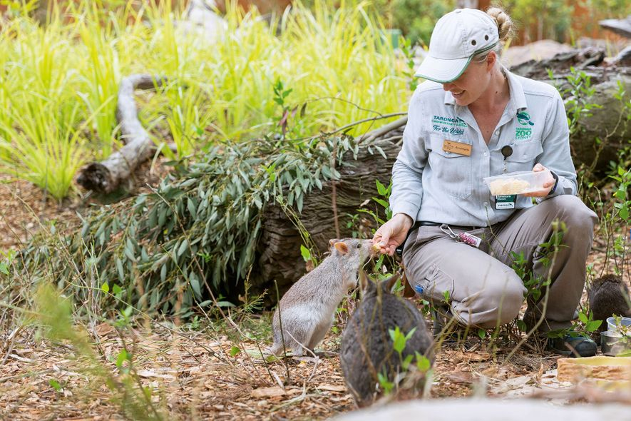 The new 64-room Wildlife Retreat at Taronga is built around The Sanctuary, an animal enclosure home to ...