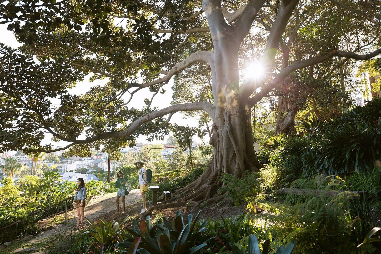 Walkers in Wendy's Secret Garden, Sydney.