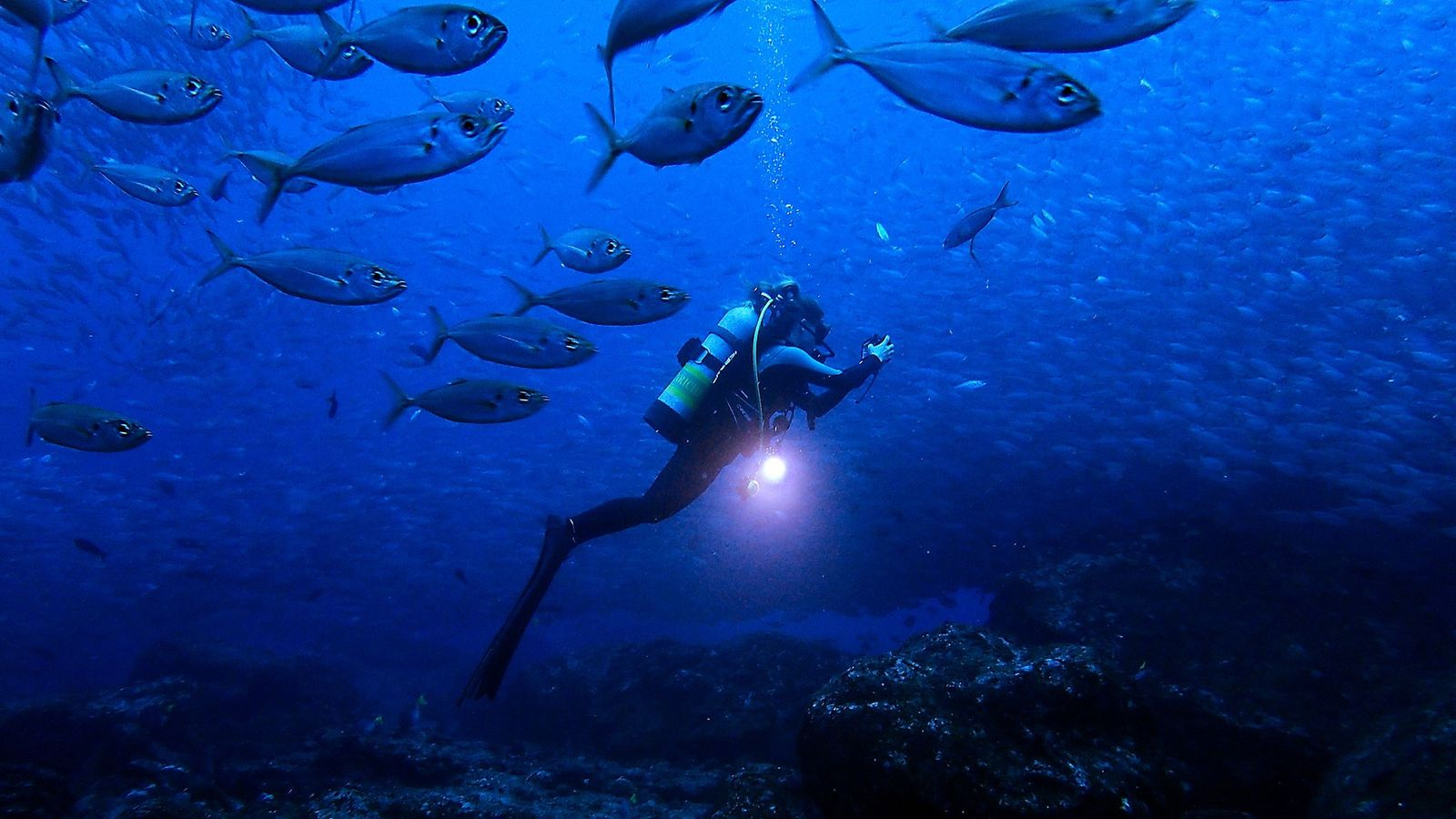 Marine biologist Jessica Cramp explores the waters of the Galapagos Islands.