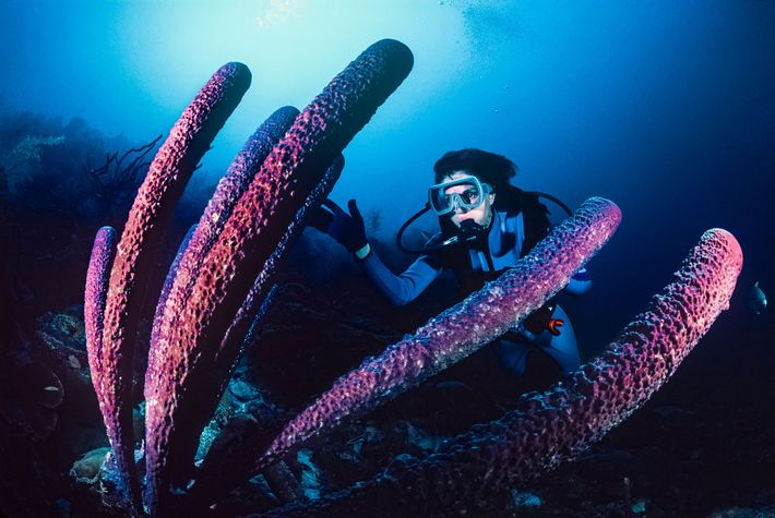 Sylvia Earle investigates a towering tube sponge in Bonaire.