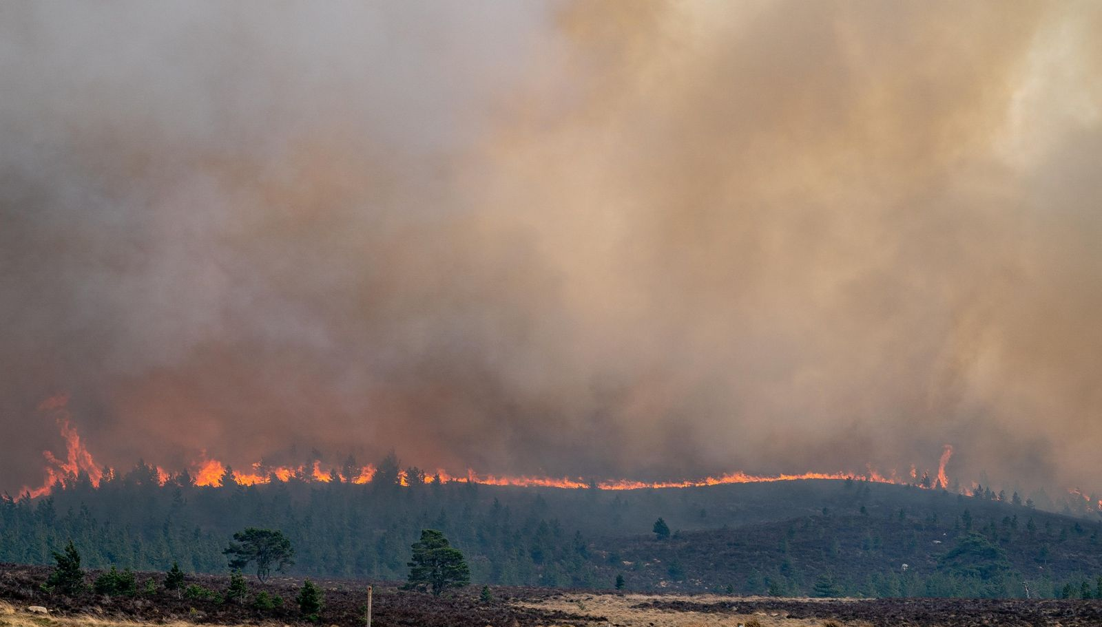 April 2019, Moray: the wildfire front was battled by firefighters, estate workers and volunteers. Dry conditions ...