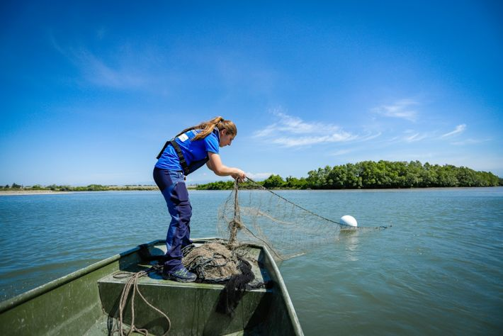 Ecologist Tamar Edisherashvili, who partnered with Fauna and Flora International, helped find evidence that critically endangered ...