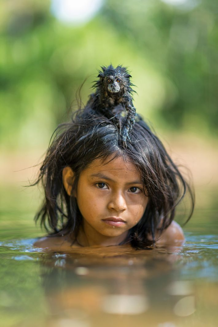 A pet saddleback tamarin hangs on to Yoina Mameria Nontsotega as the Matsigenka girl takes a ...