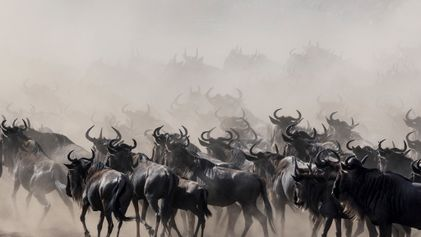 The greatest show on Earth: tracking the wildebeest migration across Tanzania's Serengeti