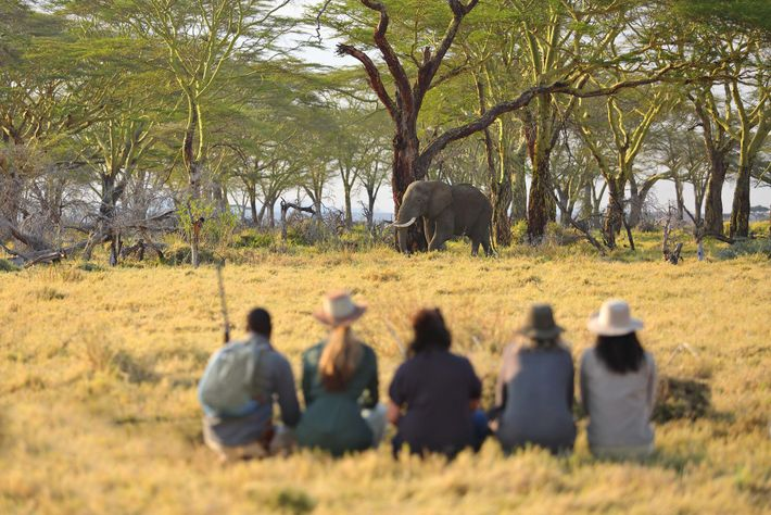 Guests at Namiri Plains Camp, in the eastern Serengeti, watch an elephant while on a walking ...