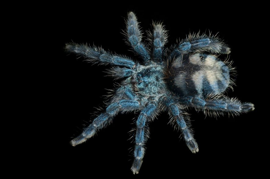 Close up Images of Rare Spiders
