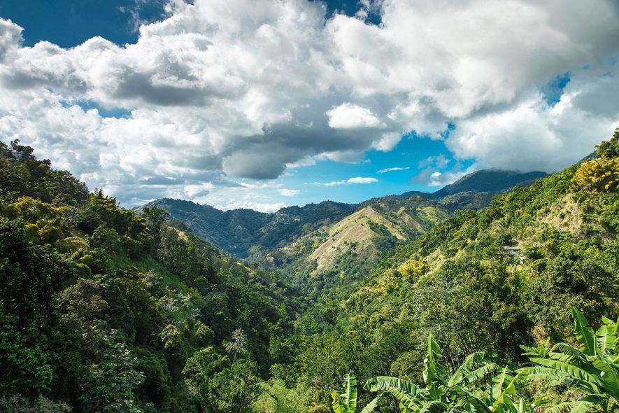 Blue Mountains, on the eastern edge of Jamaica, are the longest mountain range in the country.