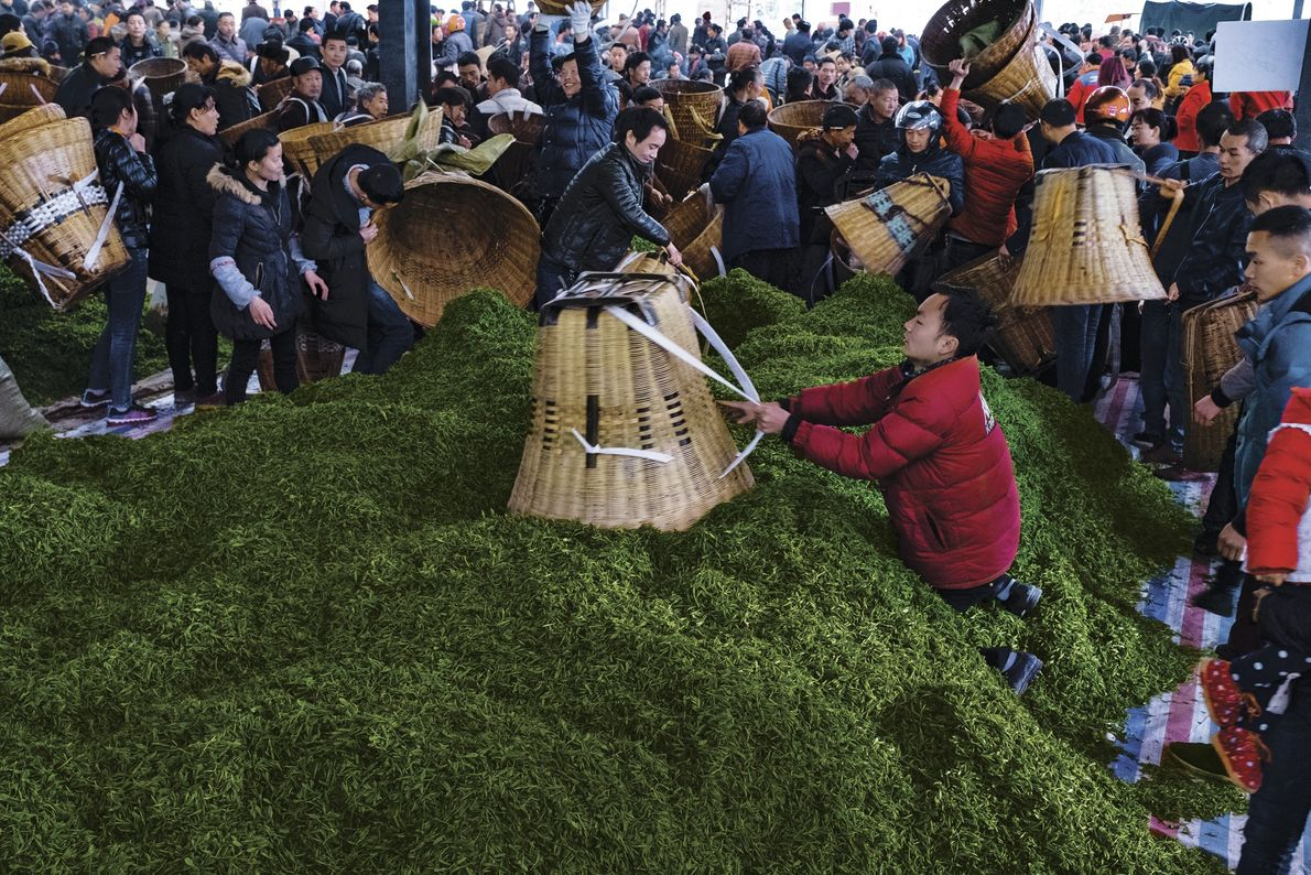 Tea growers unload freshly harvested leaves at the market in Emei, Sichuan. Buyers are often the ...