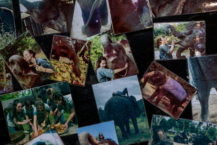 thailand-elephants-03