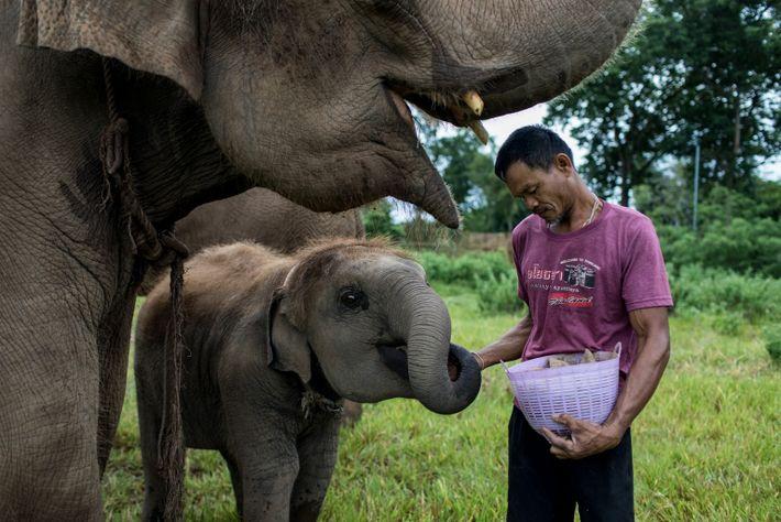 thailand-elephants-04