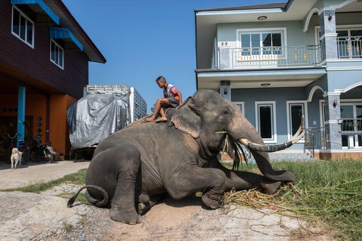 thailand-elephants-08