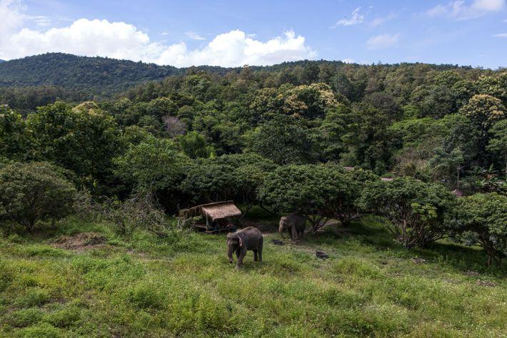 thailand-elephants-18
