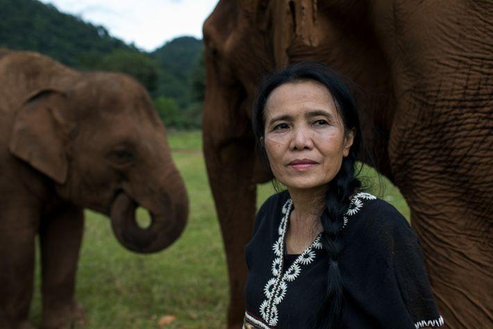 thailand-elephants-31