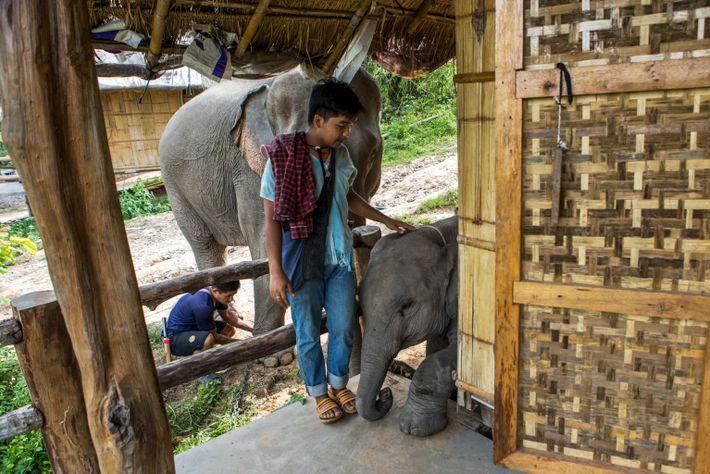 thailand-elephants-37