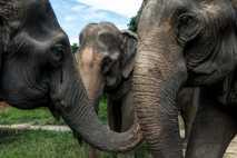 thailand-elephants-40