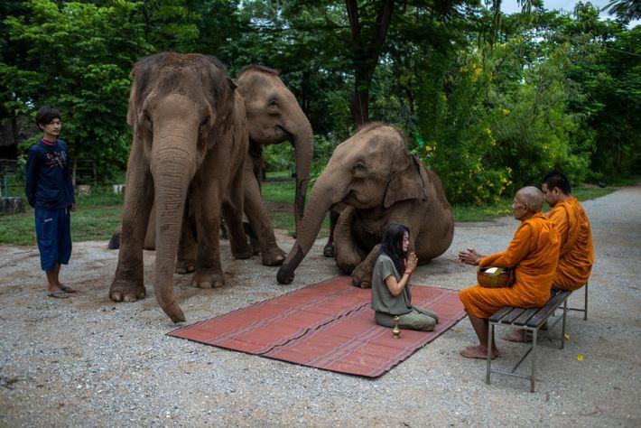 thailand-elephants-41