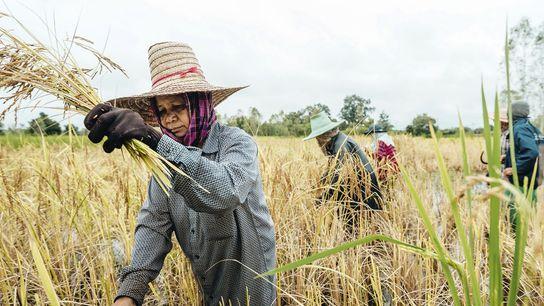 Farmers work in fields