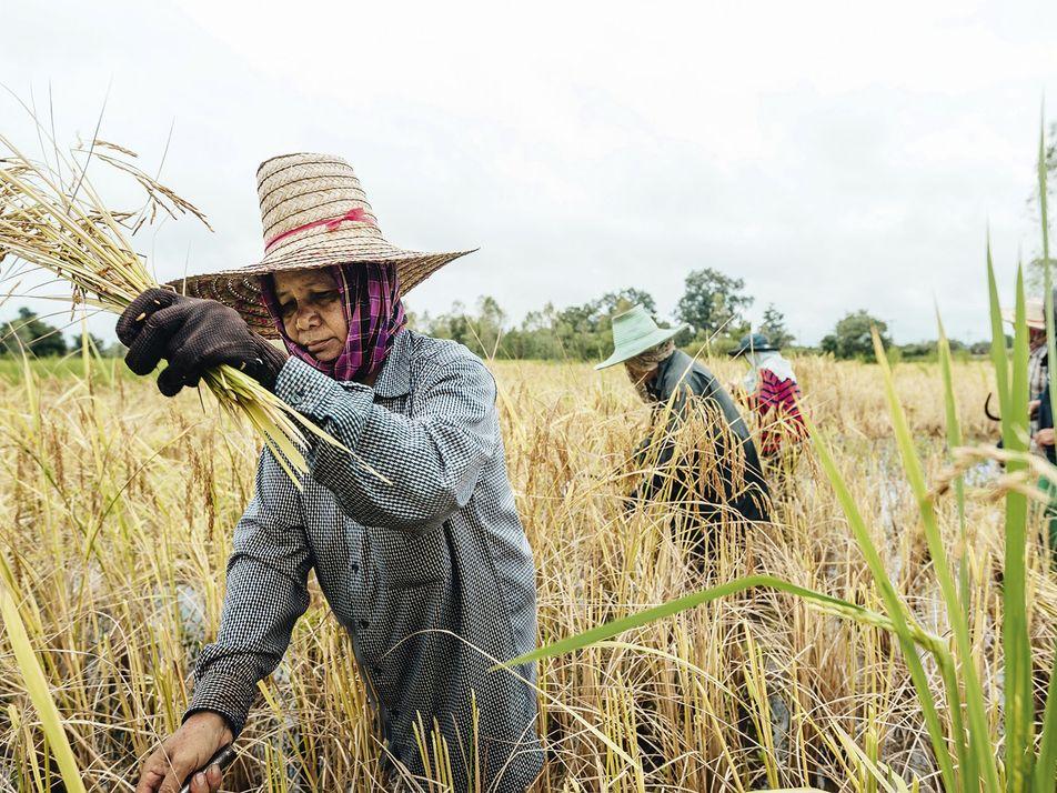 Photo gallery: Thailand
