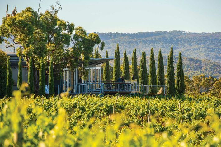 The Lane Vineyard sits 400m up in the Adelaide Hills, with a restaurant and tasting room ...