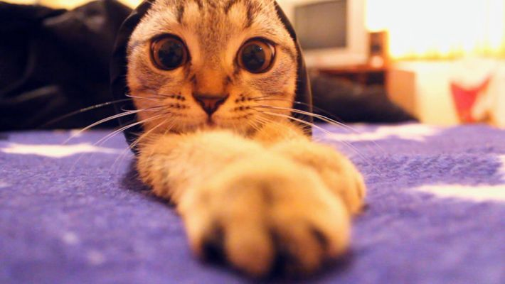 Science of cat bodies