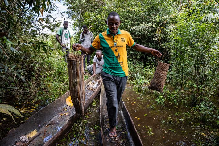 Lolifa village chief Ikomo Bokombola Pierre holds two fish traps containing snakes in western Democratic Republic ...