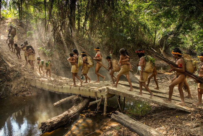 Five Awá families from Posto Awá, an outpost created by the Brazilian government's indigenous affairs agency, ...