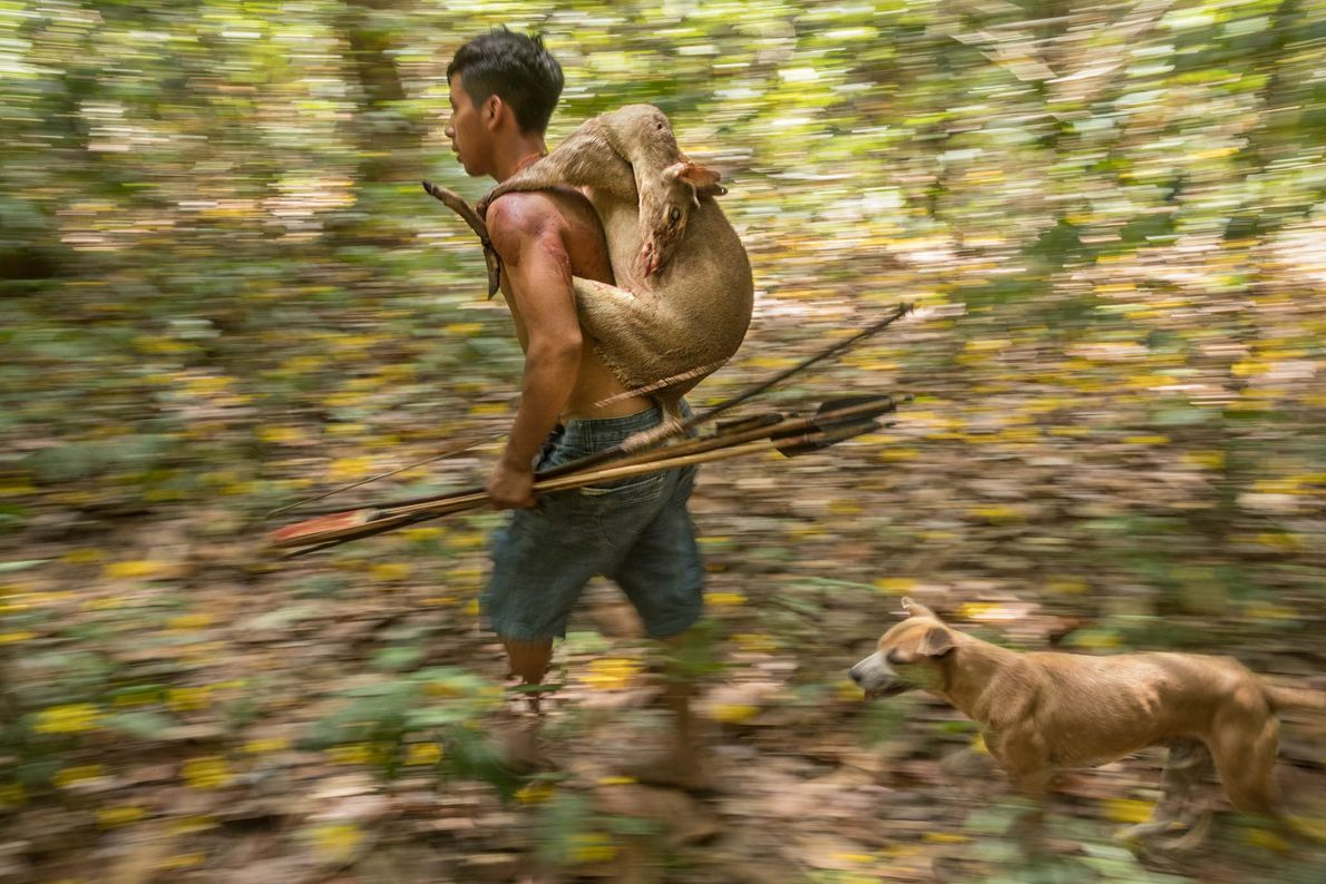 An Awá hunter returns home with a small brocket deer. Sometimes hunters see signs of the ...