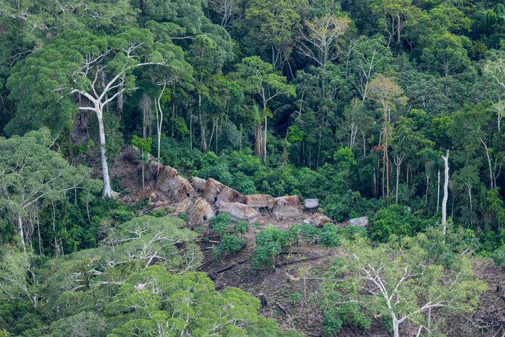 This image, taken from a plane, shows an isolated settlement in the Purús Communal Reserve. It's ...