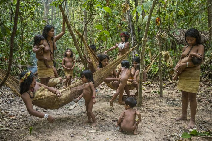 When settled Awá, like these five families from Posto Awá, spend time in the forest, they ...