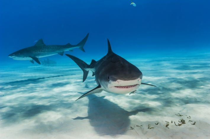 Sharkfest: Documentaries To Sink Your Teeth Into