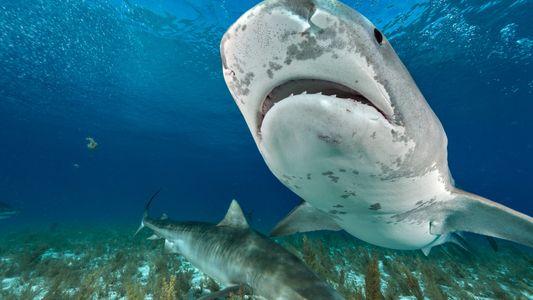 Tourist Dies in Rare Shark Attack