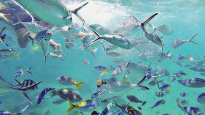 Tioman island: Discover your own coral garden