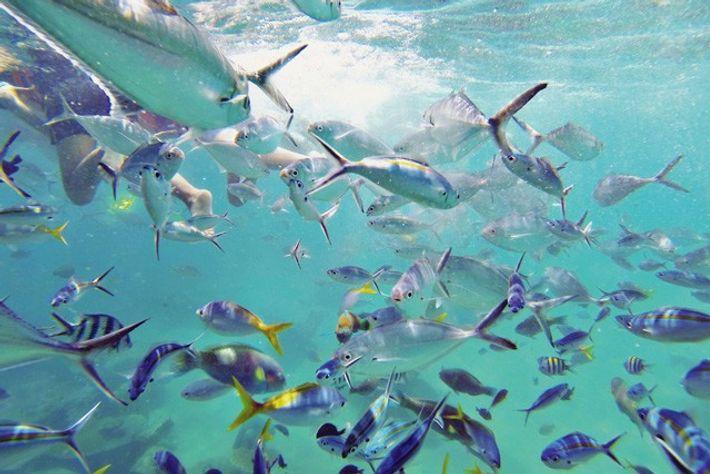 Diving on Tioman Island