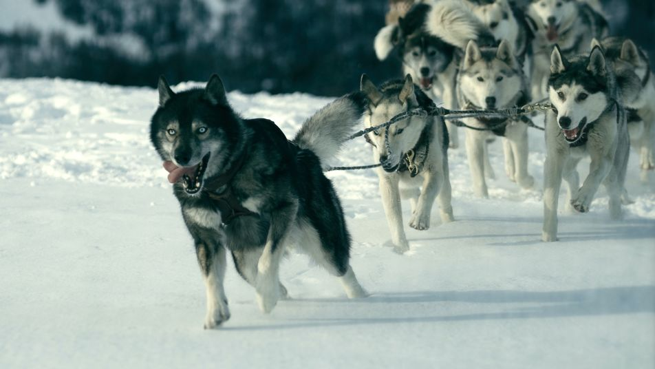 When a deadly disease gripped an Alaskan town, a dog saved the day – but history ...