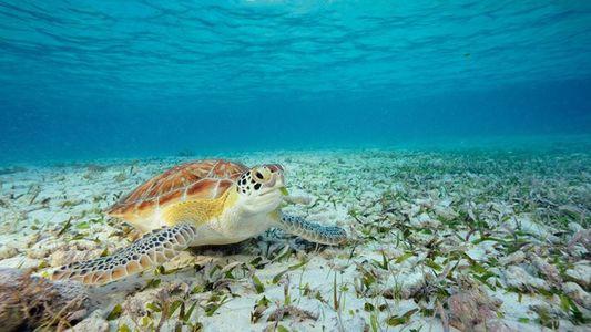 Top 5: Diving spots in Belize