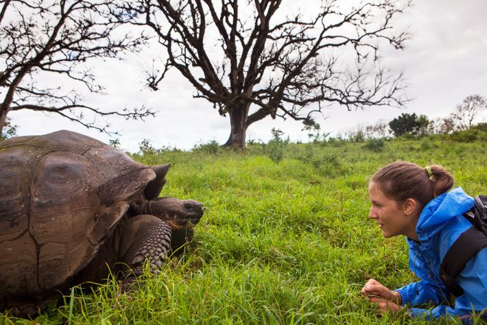 Close encounters with wildlife—such as the giant tortoise—are the norm on the Galápagos Islands.