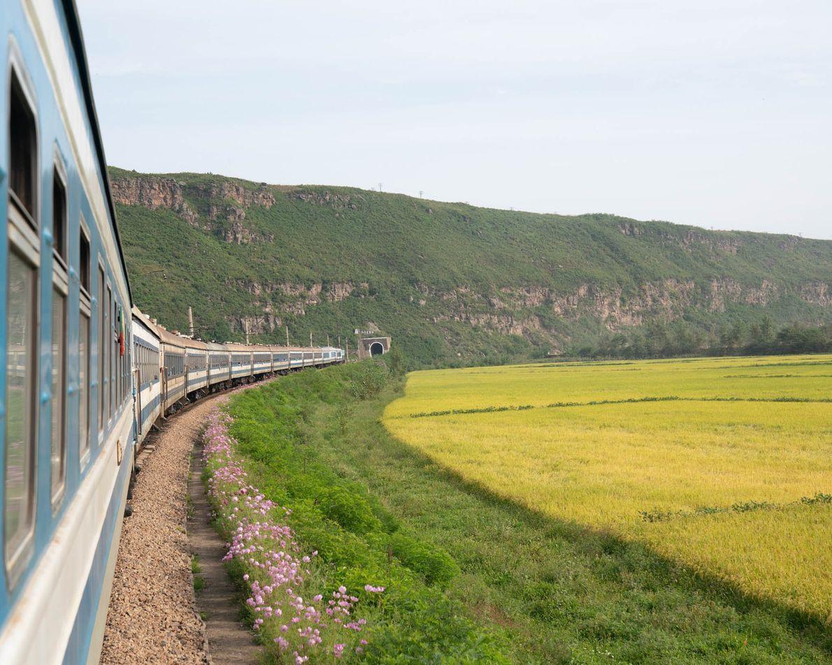 The train to Rason cuts through lush fields.