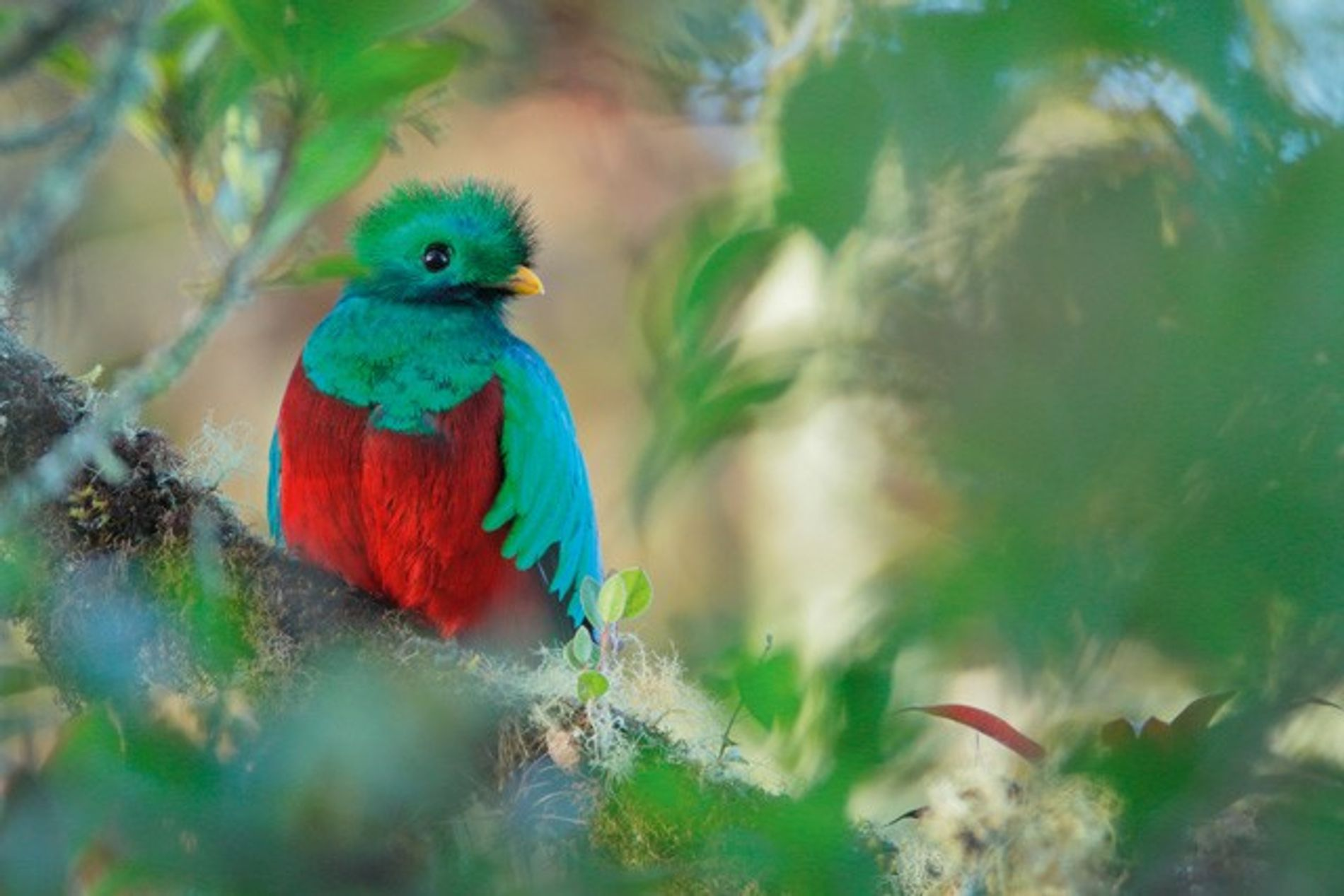 Costa Rica: In search of the quetzal