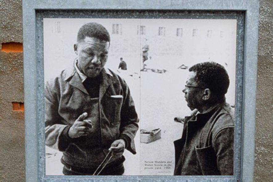 Image of Nelson Mandela and Walter Sisulu when prisoners on Robben Island