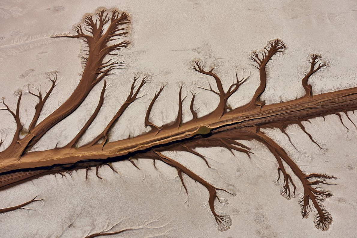 Seen from above, the Colorado River Delta makes the shape of a tree in Baja California, ...