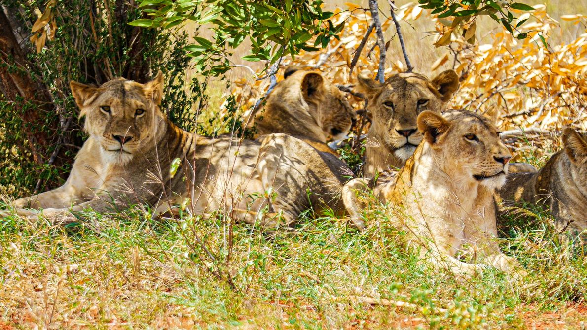 Kenya's vast national parks are a paradise for intrepid travellers. To the north of Nairobi, Laikipia ...