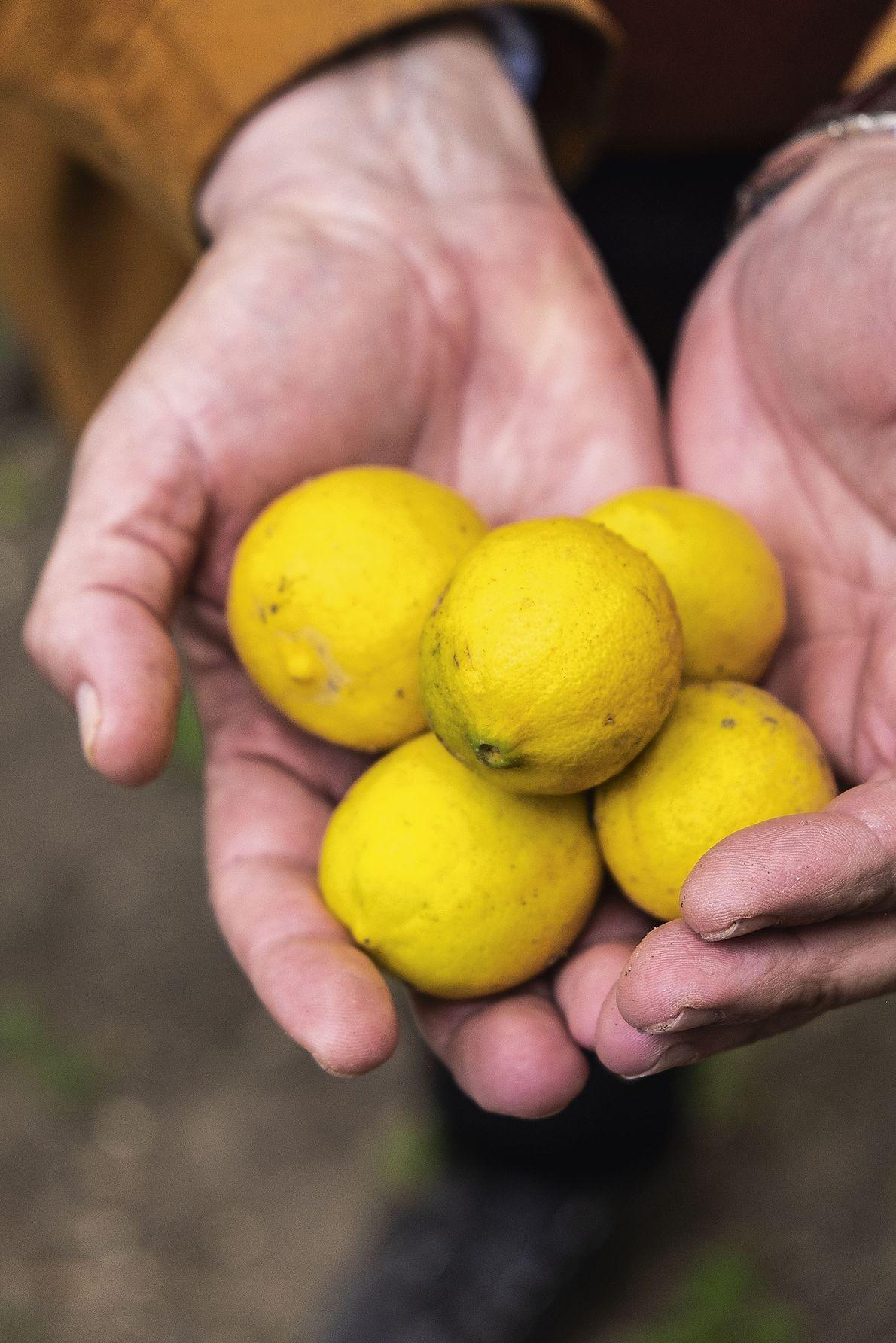 Fresh lemons from the souk.