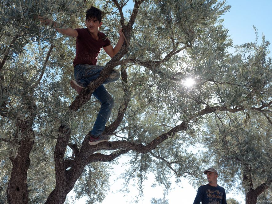 "Ahmed (at left), 17, and his brother Emin, 22, pick olives in Hatay, Turkey, for £5 a day. After leaving Syria in 2012, their family of 10 spent two years in a government-run Turkish refugee camp. ""To live in the camp was hard,"" Ahmed says, ""so we decided to leave. I have to work to support my family."""