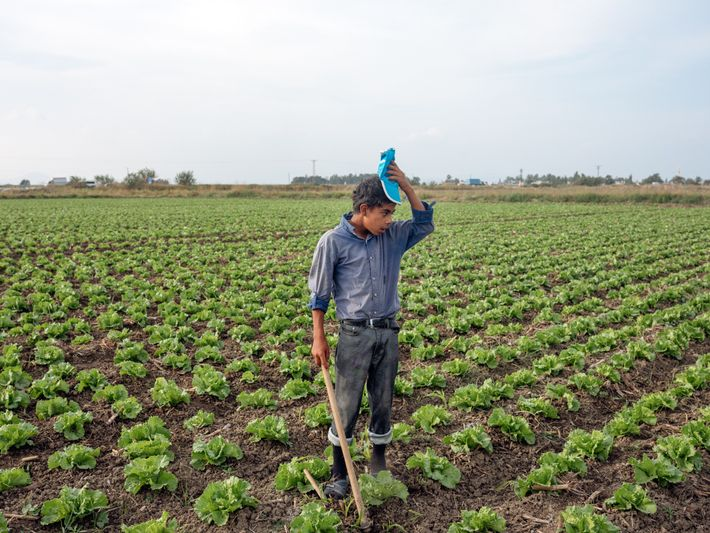 Malik, 13, has worked these fields in the Turkish coastal city of Mersin since he fled ...