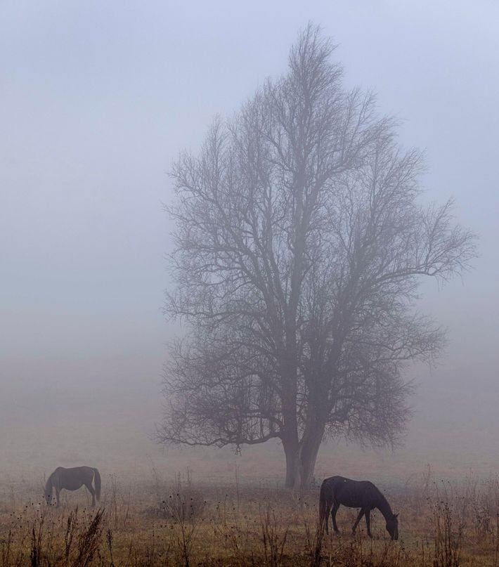 Horses appear as the morning mist fades in Omalo, where a rustic hotel offers panoramic mountain ...