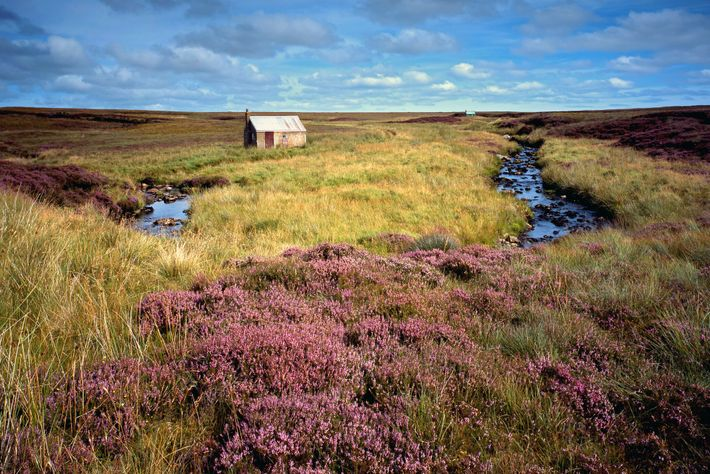 An old crofter's hut sits on the wild moors of the Isle of Lewis. Weavers produce ...