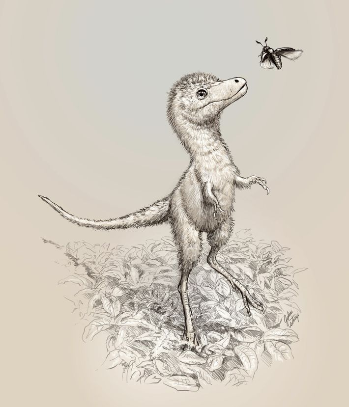 An illustration shows what Tyrannosaurus rex hatchlings may have looked like. The newly described embryonic fossils ...