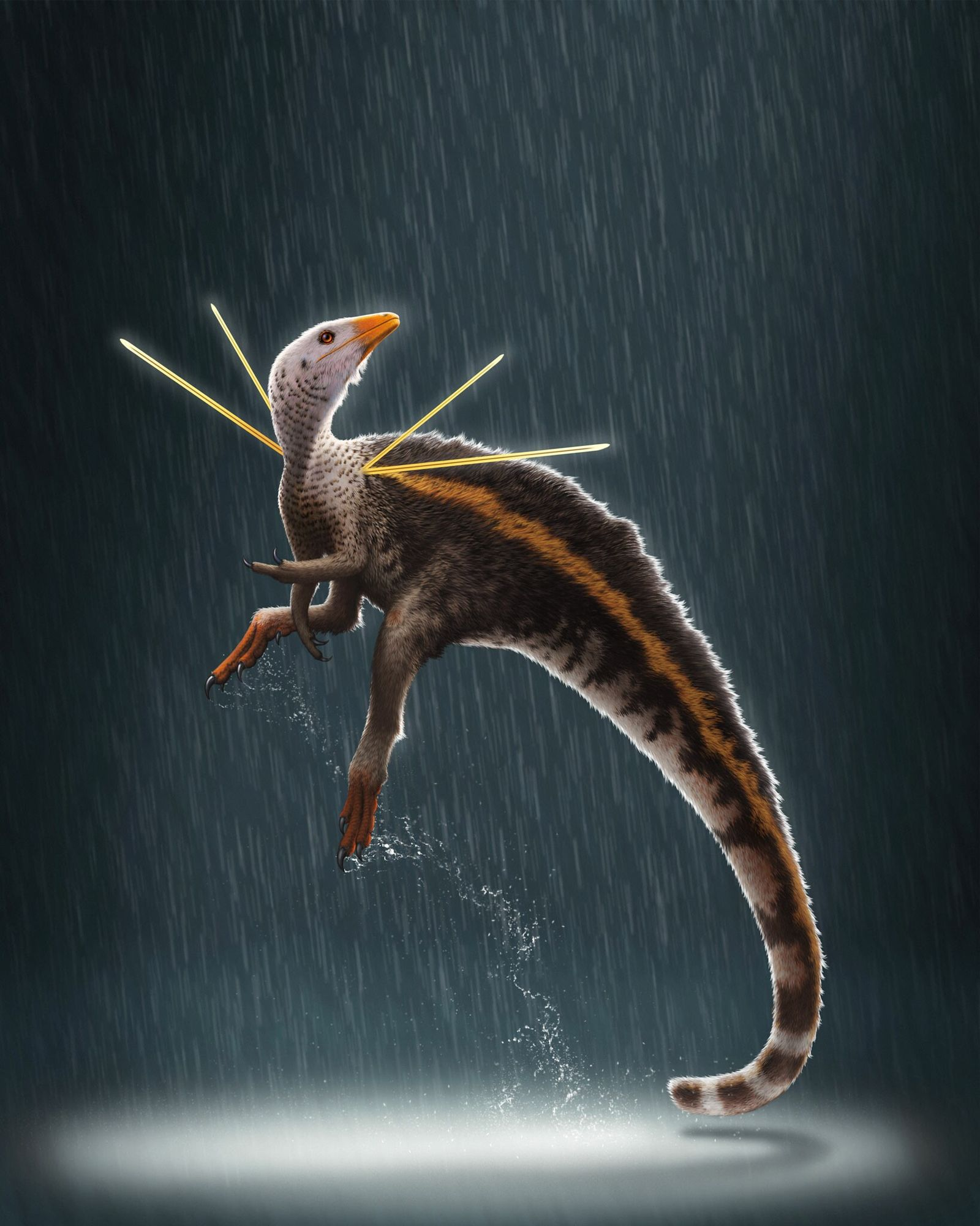 The dinosaur Ubirajara jubatus is the first known non-avian dinosaur with unusually prominent shoulder feathers. The ...