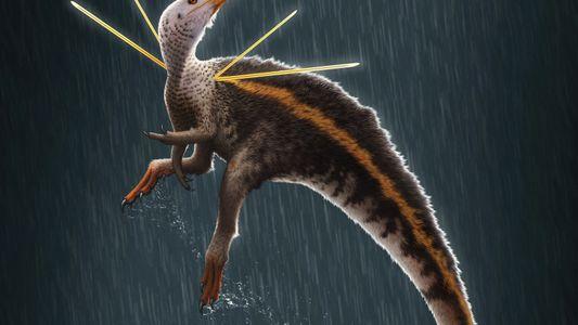 One-of-a-kind dinosaur removed from Brazil sparks backlash, investigation